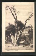 AK Hebron, Oak Of Abraham - Non Classificati