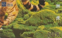 CHINA. FAUNA. PUZZLE. TIGRE - TIGER. EZW-3-6(6-6). (043). - Puzzles