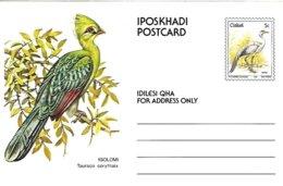 Ciskei (South Africa )  - Mint - 1981 - Postal Stationary -   Knysna Turaco    Tauraco Corythaix - Cuckoos & Turacos