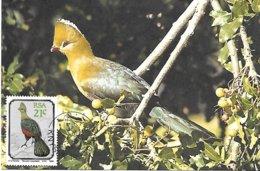 RSA (South Africa ) - Maximum Card - 1990 -  Knysna Turaco    Tauraco Corythaix - Cuckoos & Turacos
