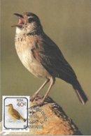 RSA (South Africa ) - Maximum Card - 1990 -  Rufous-naped Lark    Mirafra Africana - Uccelli Canterini Ed Arboricoli
