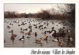 Zoo Parc Villars Les Dombes Canards - Villars-les-Dombes