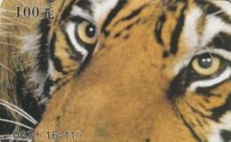 CHINA. FAUNA. PUZZLE. TIGRE Y LEON - TIGER AND LION. 063(16-11). (025). - Puzzles