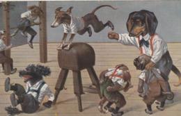 CPA Animal Humanisé Position Humaine Chien Teckel Dackel Dachshund Gymnaste Illustrateur A. THIELE  (2 Scans) - Chiens