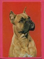 Cani - Non Viaggiata - Hunde