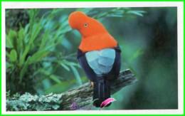 Vignette Image Stickers JUNGLE MANIA N° 22 Le Coq De Roche Du Pérou Oiseau Bird - Stickers