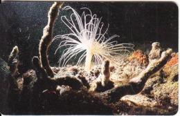 VENEZUELA(chip) - Underwater, Anemona Blanca, 01/97, Used - Peces