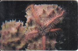VENEZUELA(chip) - Underwater, Estrella Arana De Mar, 01/97, Used - Peces