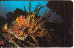 VENEZUELA(chip) - Underwater, Lirio De Mar Anaranjado, 12/96, Used - Peces