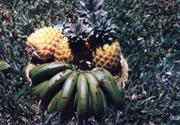 LA REUNION  Ananas Et Bananes - Cartes Postales