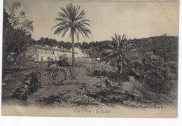Côte D'Azur - Le Dattier - 1905 (S143) - Árboles