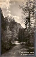 Serie: Haggen-Hölle Riethäusle - Nr. 10 Waldpartie In Der Hölle - SG St. Gallen