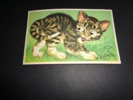 Carte ( 72 ) Avec Yeux Mobiles ( En Plastique )  -  Chat  Kat - Cartoline Con Meccanismi