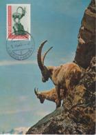 Afghanistan Carte Maximum Animaux 1964 Bouquetin 757 - Afghanistan