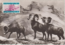 Afghanistan Carte Maximum Animaux 1964 Mouflon 758 - Afghanistan
