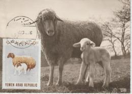 Yémen Carte Maximum Animaux 1966 Mouton 140 - Yémen
