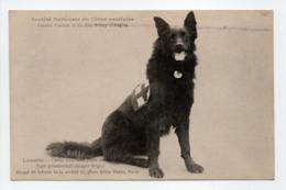 - CPA CHIENS - Loustic - Chien Sanitaire Parti Au Front - Type Gronendaël (superbe Gros Plan) - - Dogs