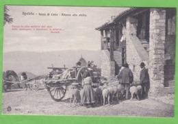 SPOLETO   -   Forca Di Cerro Ritorno Alla Stalla - Italia