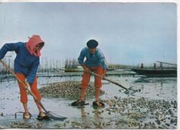 Cpa.33.Arcachon.1966.Bassin D'Arcachon.Le Travail Des Huitres - Arcachon
