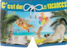 CHATS - CARTE LENTICULAIRE - C'EST DUR LES VACANCES - 4 PETITS CHATS - CPM - VIERGE - - Cats