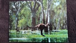 CPM KANGOUROU AUSTRALIEN ED GARRICK - Altri
