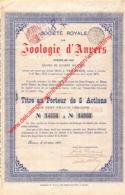 Zoologie D'Anvers - Zoo Antwerpen - Aandeel Van 1899 - Titre Au Porteur De 5 Actions - W - Z