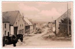 Doische - Gimnée - Grand'Rue - Cheval En Gros Plan - Mosa N°5116 - Doische