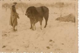 Foto 2. WK - Foto Soldat Mit Pferd Und Fohlen - Winter In Russland - Fotografie