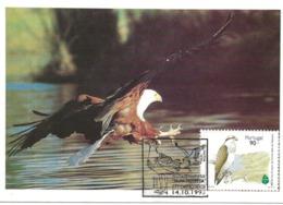 CARTE MAXIMUM - MAXICARD -  MAXIMUMKARTEN - MAXIMUM CARD -  PORTUGAL - OISEAUX - AIGLE DE PÊCHE - Pandion  Haliatus - Águilas & Aves De Presa