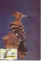 CARTE MAXIMUM - MAXICARD - MAXIMUMKARTEN - MAXIMUM CARD - PORTUGAL - MACAO / MACAU - OISEAUX - Upupa Epops - Piciformes (pájaros Carpinteros)