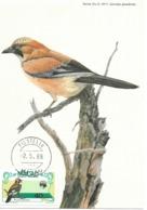 CARTE MAXIMUM - MAXICARD - MAXIMUMKARTEN - MAXIMUM CARD - PORTUGAL - MACAO / MACAU - OISEAUX - Garrulus Glandarius - Piciformes (pájaros Carpinteros)