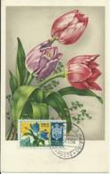 Cartes Maximum - San Marino - Fleurs - Saint-Marin