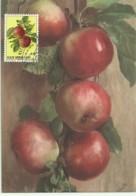 Cartes Maximum - San Marino - Fruits - Mele - Apples - Pommes - Maças - Lettres & Documents