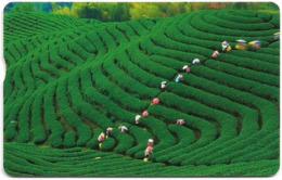 Taiwan - Chunghwa Telecom (Chip) - People Working In The Tea Field - 210U, Exp. 31.12.2011, Used - Taiwán (Formosa)