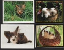 Lot De 4 Calendriers De Poche Avec Chats Ou Chatons Années 1 De 1990 , 2 De 1991 Et 1 De 1992 - Calendriers