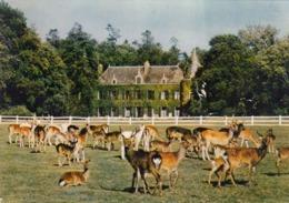 Cp , 56 , MUZILLAC , Environs , LE GUERNO , Parc Zoologique De Branféré, Cerfs Axis - Muzillac