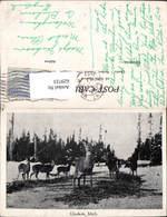 629723,Wild Rehe Gladwin Michigan - Vereinigte Staaten