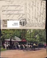 629604,The Pony Carts On Belle Isle Pony Pferde Detroit Michigan - Vereinigte Staaten