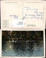 629585,Sunset Lake Asbury Park Schwan Schwäne New Jersey - Vereinigte Staaten