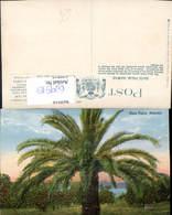 629515,Date Palm Palme Hawaii - Ansichtskarten