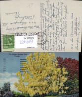 629493,The Golden Shower Tree Baum Florida - Ohne Zuordnung