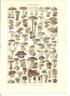 Gravure Ancienne Planche Originale 1931 Champignons Truffe Culture Champignon Spores Cèpe Morille - Ohne Zuordnung