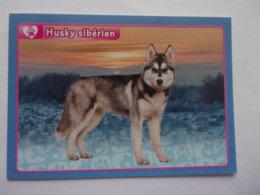 PANINI ANIMAL WORLD Animaux N°332 Husky Sibérien Chien Esquimaux Dog Hund Perro Kutya - Edition Française