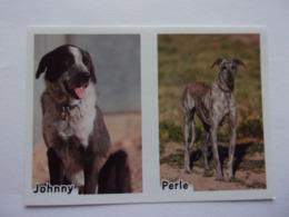 PANINI ANIMAL WORLD Animaux N°522 A & 522 B Chien Dog Hund Perro Kutya - Edition Française