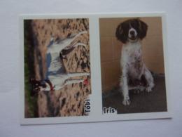 PANINI ANIMAL WORLD Animaux N°523 A & 523 B Chien Dog Hund Perro Kutya - Edition Française