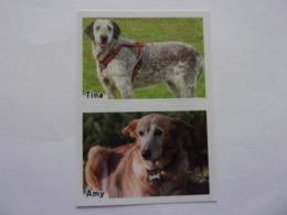 PANINI ANIMAL WORLD Animaux N°525 A & 525 B Chien Dog Hund Perro Kutya - Edition Française