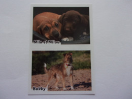 PANINI ANIMAL WORLD Animaux N°524 A & 524 B Chien Dog Hund Perro Kutya - Edition Française