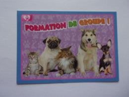 PANINI ANIMAL WORLD Animaux N°462 Chien Dog Hund Perro Kutya Chat Cat Katze Gato - Edition Française