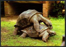 C7664 - TOP Dresden Zoologischer Garten Zoo Tierpark - Riesen Schildkröte - Verlag Bild Und Heimat Reichenbach - Schildpadden