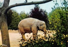 Romanèche Thorins Canton La Chapelle De Guinchay Zoo éléphant - France